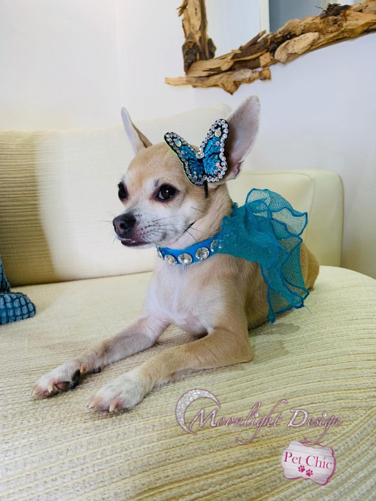 Basic pet collar with crystals