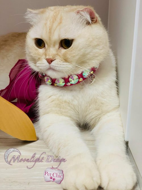 Fashion Accessory For Pets   Love Wrap   Moonlight Design